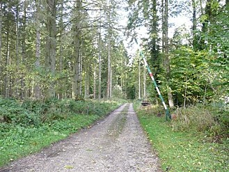 Foret-dEawy_Allee-forestiere-des--plantations